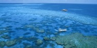 Reef Boat Day Trip - Port Douglas - Quicksilver image 6