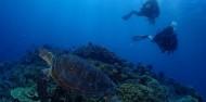 Reef Boat Overnight  - Rum Runner image 7