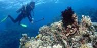 Reef Boat Overnight  - Rum Runner image 8