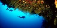 Liveaboard Dive Boat - Cod Hole & Coral Sea image 3
