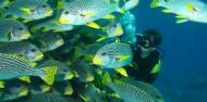 Liveaboard Dive Boat - Cod Hole & Coral Sea image 6