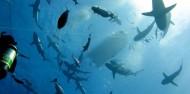 Liveaboard Dive Boat - Cod Hole & Coral Sea image 10