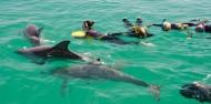 Dolphin Swim - Swim with Wild Dolphins image 3
