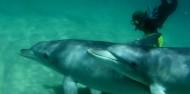 Dolphin Swim - Swim with Wild Dolphins image 11