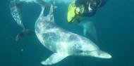 Dolphin Swim - Swim with Wild Dolphins image 9