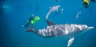 Dolphin Swim - Swim with Wild Dolphins image 2