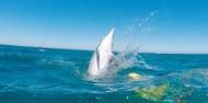 Dolphin Swim - Swim with Wild Dolphins image 5