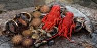 Tasmanian Seafood Seduction image 7