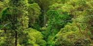 Ziplining - TreeTop Challenge Tamborine Mountain image 6