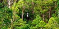 Ziplining - TreeTop Challenge Tamborine Mountain image 3