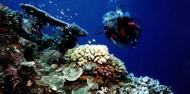 Reef Boat Day Trip - Tusa Dive image 10