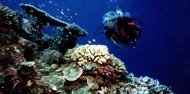 Learn to Dive Course - 4 Days - Pro Dive/Tusa Dive image 5