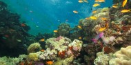 Learn to Dive Course - 4 Days - Pro Dive/Tusa Dive image 8