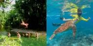 Cape Tribulation 2 Day Combo Tour - Rainforest & Reef Snorkel image 1