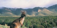 Grampians National Park Day Tour image 5