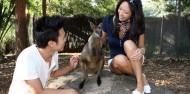 Taronga Zoo Guided Tour - Aboriginal Discovery Tour image 5