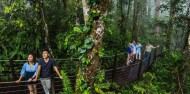 Skyrail Rainforest Cableway image 3