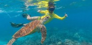 Cape Tribulation 2 Day Combo Tour - Rainforest, Reef Snorkel & Bungy image 4
