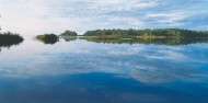 Noosa Everglades - Afternoon River Cruise image 5