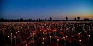 Uluru Sunrise & Field of Light image 2