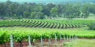 Wine Tours - Hunter Valley Wine Tasting image 2