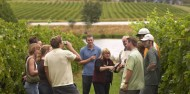 Wine Tours - Yarra Valley Wine Experience image 1