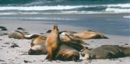 Kangaroo Island Tour image 3