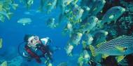 Liveaboard Dive Boat -  Pro Dive image 7