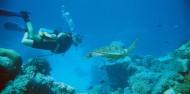 Liveaboard Dive Boat -  Pro Dive image 9