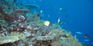 Liveaboard Dive Boat -  Pro Dive image 8
