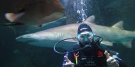 Shark Dive Xtreme - Manly image 2