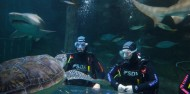 Shark Dive Xtreme - Manly image 3