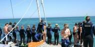 Dolphin Swim - Temptation Sailing image 6
