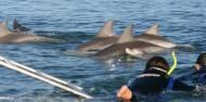 Dolphin Swim - Temptation Sailing image 1