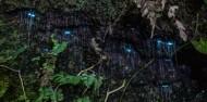 Evening Rainforest, Waterfall & Glow Worm Tour at Tamborine Mountain image 1