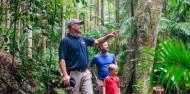 Evening Rainforest, Waterfall & Glow Worm Tour at Tamborine Mountain image 6