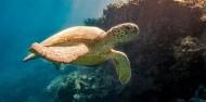 Reefsleep - Cruise Whitsundays image 6