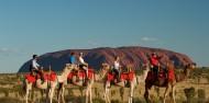 Camel Rides - Uluru Camel Tours image 1