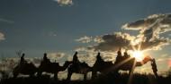 Camel Rides - Uluru Camel Tours image 3