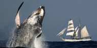 Whale Watching - Whale & Sail image 1