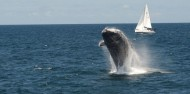 Whale Watching - Captain Cook Cruises image 5