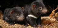 Taronga Zoo Guided Tour - Wild Australia Experience image 5