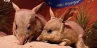 Taronga Zoo Guided Tour - Wild Australia Experience image 3