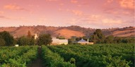Barossa Valley Day Tour with Hahndorf - Everything Australia