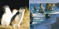 Great Ocean Road & Phillip Island Penguins Combo - Everything Australia