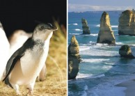Great Ocean Road & Phillip Island Penguins Combo