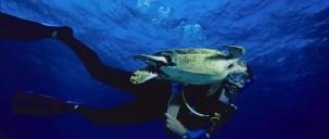 Liveaboard Dive Boat - Divers Den