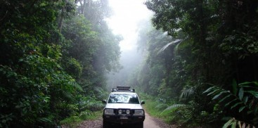 Rainforest Tours - Wait a While - Everything Cairns