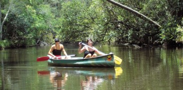 Noosa Everglades - Canoe & River Cruise - Everything Australia