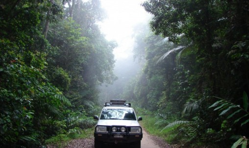 Rainforest Tours - Wait a While - Cairns